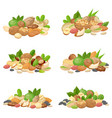 nuts bunch fruit kernels dried almond nut and vector image vector image
