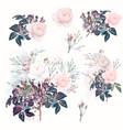 beautiful set rose flowers in watercolor style vector image vector image
