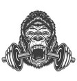 bodybuilding concept with gorilla vector image