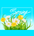 fresh spring juicy chamomile and dandelions vector image vector image