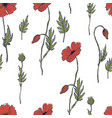 pattern with red poppies on white background vector image