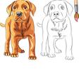 coloring book puppy dog labrador vector image