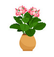 kalanchoe house plant in flower pot vector image vector image