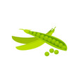 mature bright green young peas sweet pea vector image
