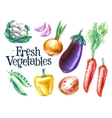 ripe vegetables logo design template vector image vector image