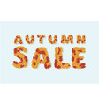 autumn sale text colorful seasonal fall leaves vector image