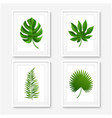 picture frame with palm leaves isolated vector image vector image