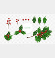 holly berry set symbol of christmas isolated on vector image