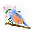 small songbirdon bluebird thrush vector image vector image