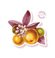 sticker with hand drawn tangerine branch vector image vector image