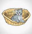 Kitten in Basket vector image