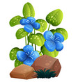blue flower and rocks on white background vector image vector image