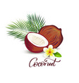 coconut and plumeria flower vector image