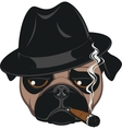 Funny pug with cigar vector image