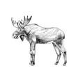 hand drawn elk vector image