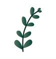 leaf branch in green color vector image vector image