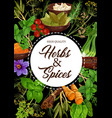 seasoning natural herbs and spices vector image vector image