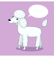 with cartoon poodle vector image