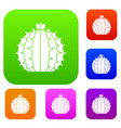 lophophora cactus set color collection vector image vector image