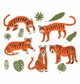 set with tigers and tropical leaves to decorate vector image
