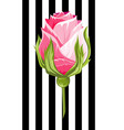 pink rose bud isolated flower vector image vector image