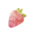 watercolor strawberry fruit on white vector image vector image