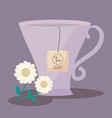 cup tea of chamomile isolated icon vector image