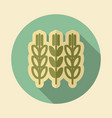 spikelets and grains of wheat icon vector image