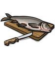 freshwater raw fish vector image vector image