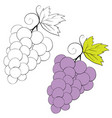 set grapes drawn in black lines and painted vector image vector image