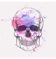human skull with watercolor splash vector image