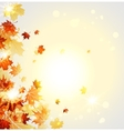 Autumn beautiful leaves vector image vector image
