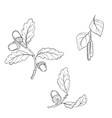 drawing branches vector image