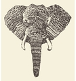 ethnic elephant head hand drawn sketch vector image