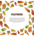 feathers banner with ethnic colorful ornament and vector image