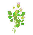 five rose buds vector image vector image