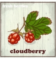 Hand drawing of cloudberry Fresh vector image vector image