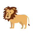 lion wild animal vector image vector image