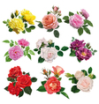 Set of multicolored roses vector image vector image