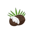 Coconut Isolated on White vector image