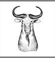 hand drawn head bizon vector image vector image