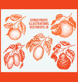 citrus fruits set hand drawn fruit vector image