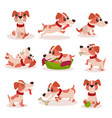 cute jack russell terrier characters set funny vector image vector image
