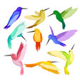 flat set of hummingbirds with colorful vector image