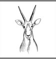 hand drawn head antelope vector image vector image
