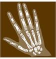 engraving hand bone x-ray vector image