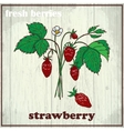 Hand drawing of strawberry Fresh vector image vector image