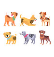 playful padigree dogs with unusual fur color set vector image vector image