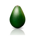 3d realistic whole avocado closeup isolated vector image vector image