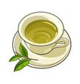 china porcelain cup saucer fresh green tea leaf vector image vector image